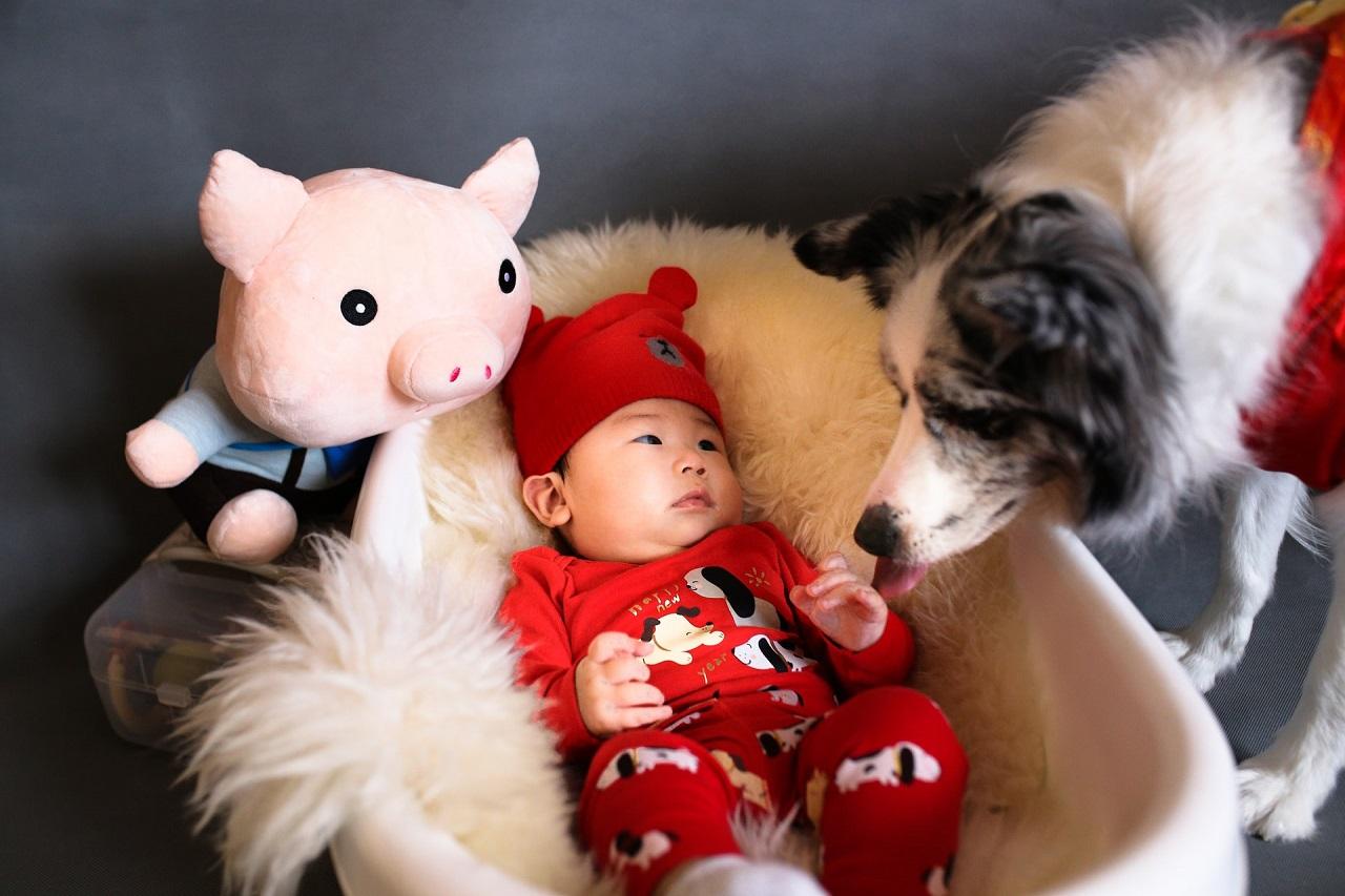Baby schlafen deutlich lieber in einer elektrischen Babywippe ein, als in solch einem herkömmlichen Babybett. Außerdem sind die meisten elektrischen Babywippen mit einem Spielebogen ausgestattet.